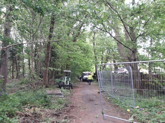 Controversial work to axe trees is to stop until June