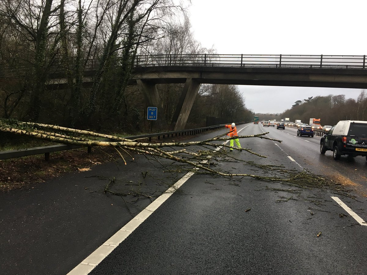 The tree on the M27 westbound (pic: Hants Road Policing)