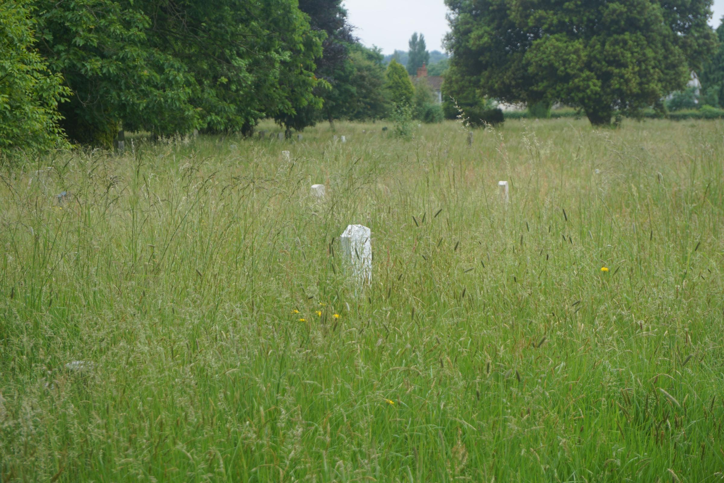 Hidden graves: Grass growing around war graves at South Stoneham Cemetery